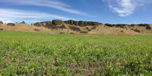 Establishing Cover Crops for Soil Health in Low-Rainfall Eastern Washington