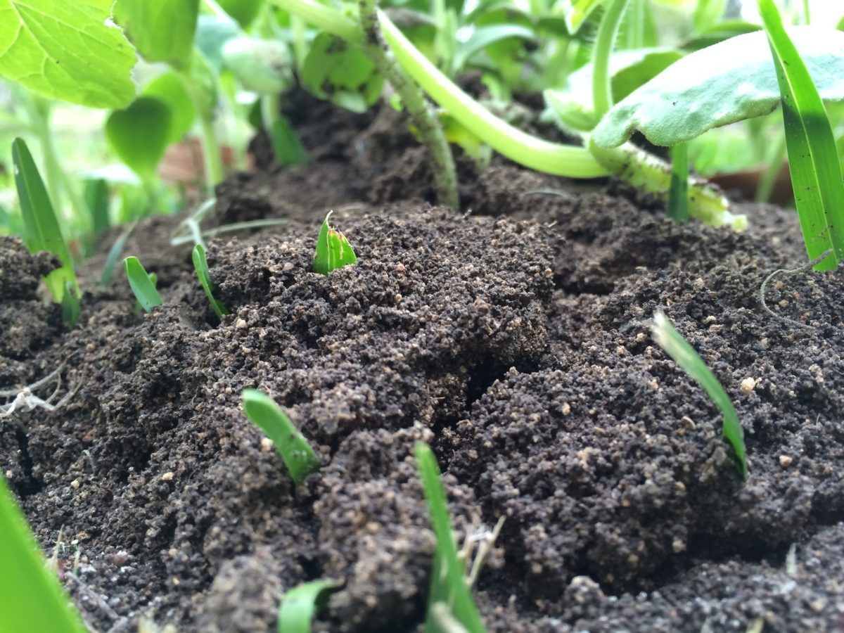Earn Income for Enriching Your Soil